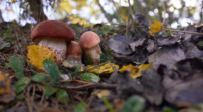 Unui bărbat i-au crescut ciuperci halucinogene în sânge după ce și le-a injectat în vene. Explicația medicilor