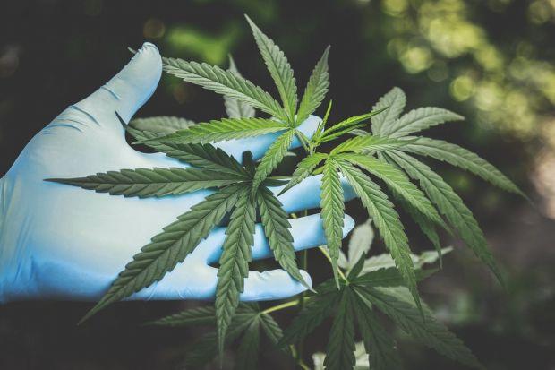Ceaiuri cu conţinut ridicat de THC, substanţa principală din cannabis, retrase de un supermarket