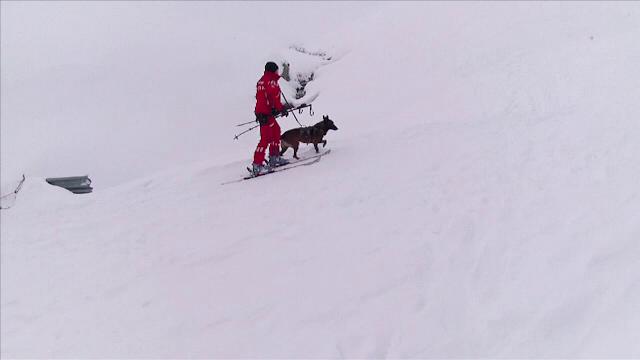 Câinii de căutare în caz de avalanșă, esenţiali pentru salvamontiștii români. Cum sunt antrenați