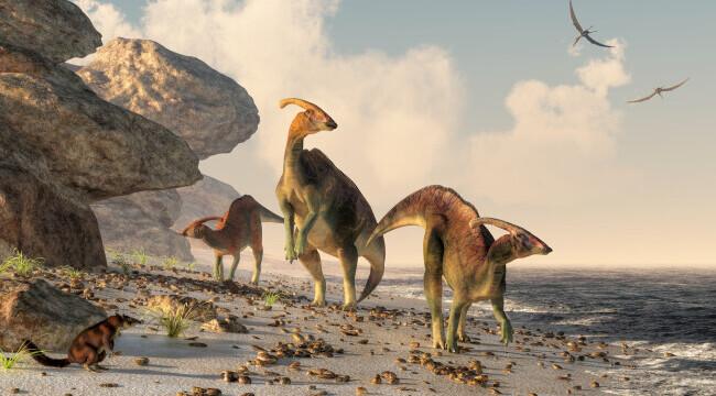 O fetiță de patru ani din Regatul Unit a descoperit o urmă de dinozaur pe plajă. Cum arată. FOTO