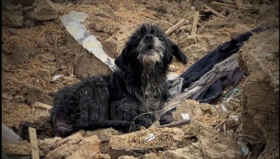 Un câine din Suceava a continuat să păzească o casă și la trei ani după ce i-au murit stăpânii