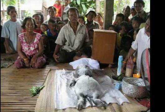 Extraterestru sau creatura mitica? O vietate ciudata a ingrozit Thailanda!