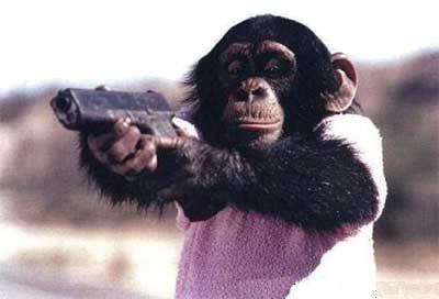 Cotidian chinez: maimute antrenate sa lupte pentru armata talibana