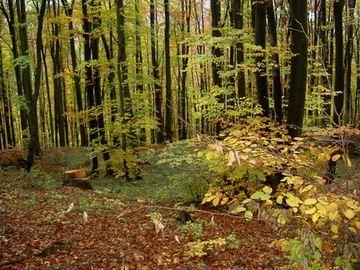 In Alba a inceput actiunea de impadurire. Vor fi plantati peste 980.000 de puieti
