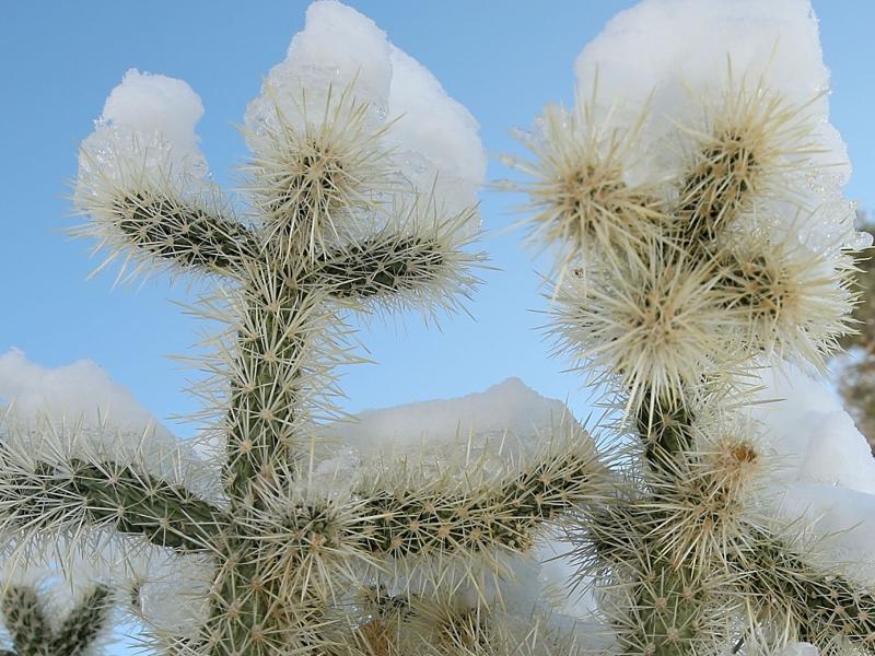 O vreme nebuna, nebuna de tot. A nins in desertul Atacama, cea mai arida zona de pe Terra