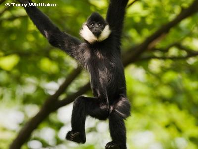 Cercetatorii au descoperit o maimuta considerata disparuta:
