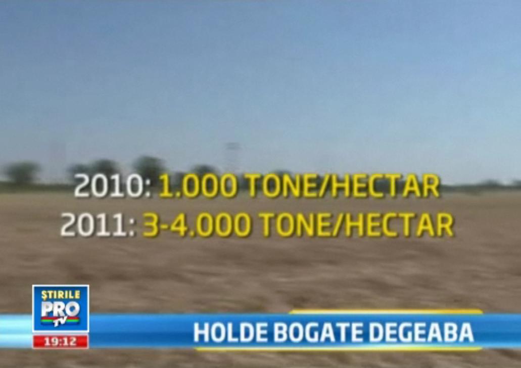 Holde bogate degeaba: avem cea mai mare recolta de grau din ultimii 5 ani.Taranii n-au unde s-o tina