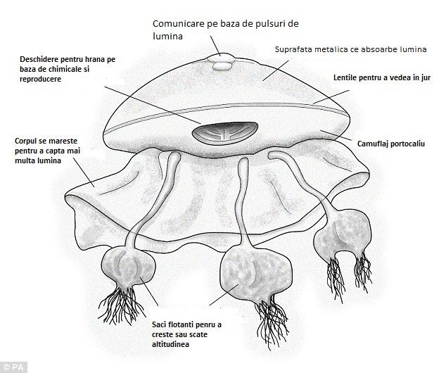 Un renumit savant: extraterestrii probabil exista si arata ca niste meduze uriase