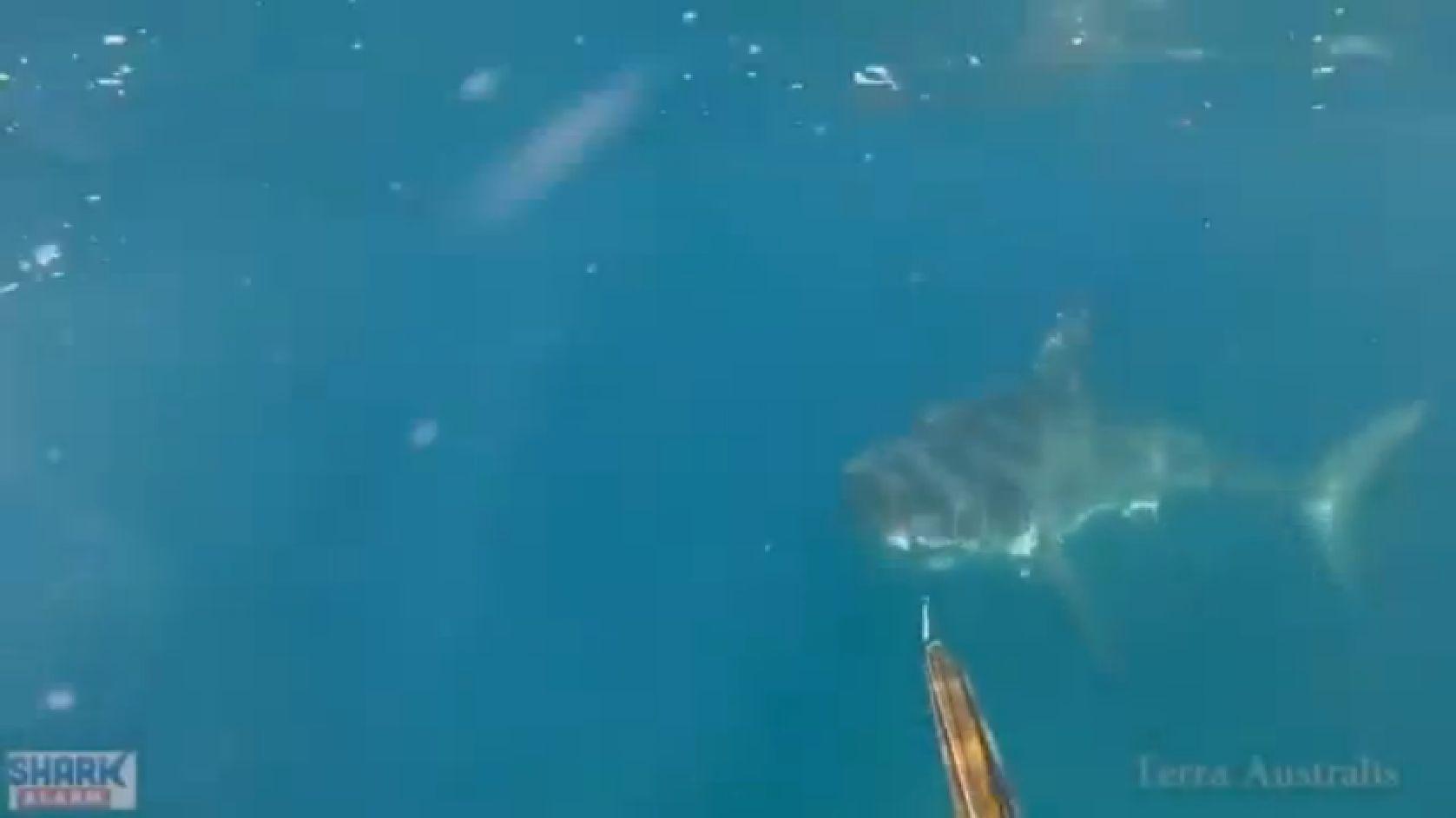 Doi pescari au filmat momentul in care se lupta pe viata si pe moarte cu Marele Rechin Alb