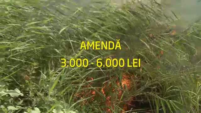 Expertii cred ca incendiile de vegetatie din Delta Vacaresti au fost puse intentionat