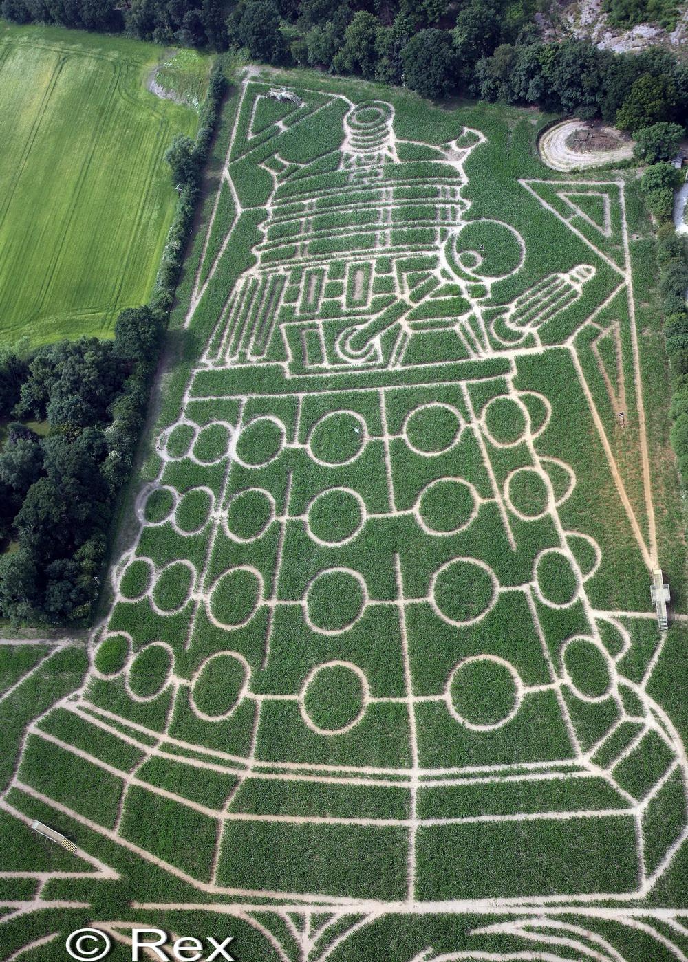 Cel mai mare labirint din Europa: ce au descoperit britanicii intr-un lan de porumb