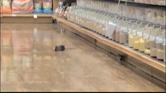 Sobolani care se plimba nestingheriti pe rafturile supermarketului. Imaginile care i-au infuriat pe americani