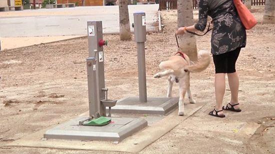 Orasul din Europa unde cainii au parte de toalete publice. Proprietarii lor sunt incantati de idee. VIDEO