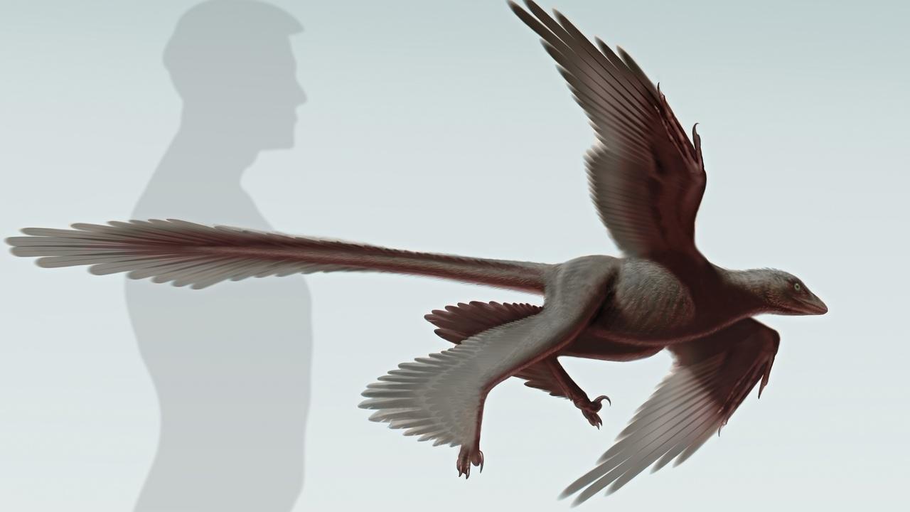 Scheletul unui dinozaur cu patru