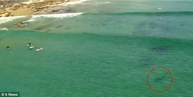 Se pregateau sa faca surf, fara sa stie ce se afla la cativa metri de ei. Cum au fost salvati niste tineri in ultima secunda