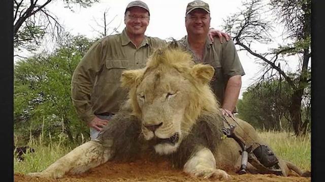 Cati ani de inchisoare risca cei doi barbati care l-au ajutat pe dentistul american sa-l ucida pe leul Cecil, in Zimbabwe