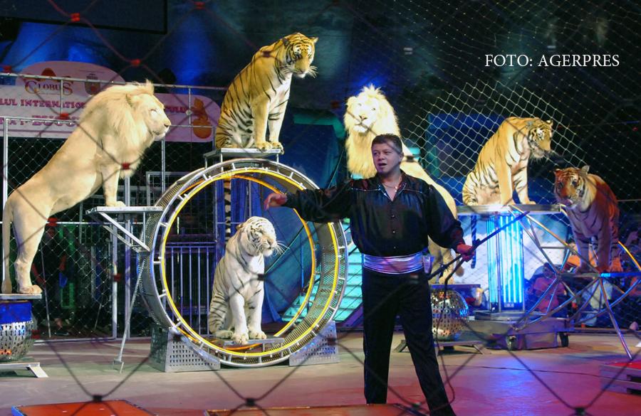 Circul Globus ar putea sa nu mai aiba niciun numar de dresura cu animale. Leii,