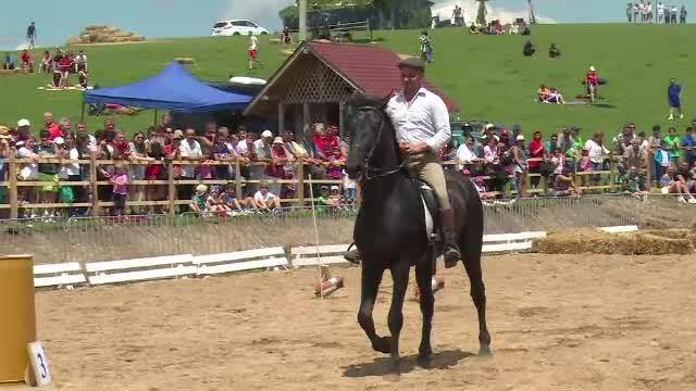 Distractie mare la Runcu, unde are loc Haidook Summer Fest. Pasionatii de echitatie pot admira caii de rasa