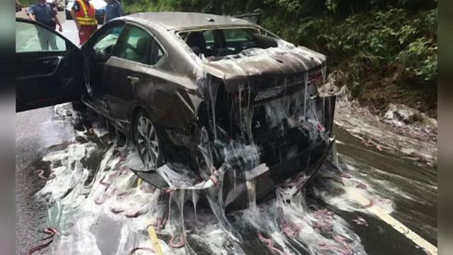 Un camion plin cu tipari s-a rasturnat pe o sosea din SUA. Pompierii au avut de curatat mazga alba secretata de pesti