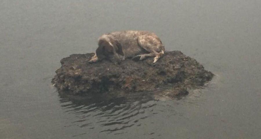 De ce a devenit acest câine simbolul speranței pentru grecii afectați de incendii