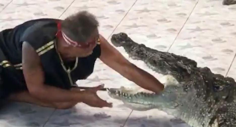 De la distracție, la groază. Momentul în care un îngrijitor pune mâna în gura unui crocodil. VIDEO