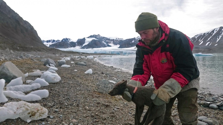 O vulpe polară i-a uimit pe cercetători, călătorind din Norvegia în Canada. Cum a traversat Oceanul