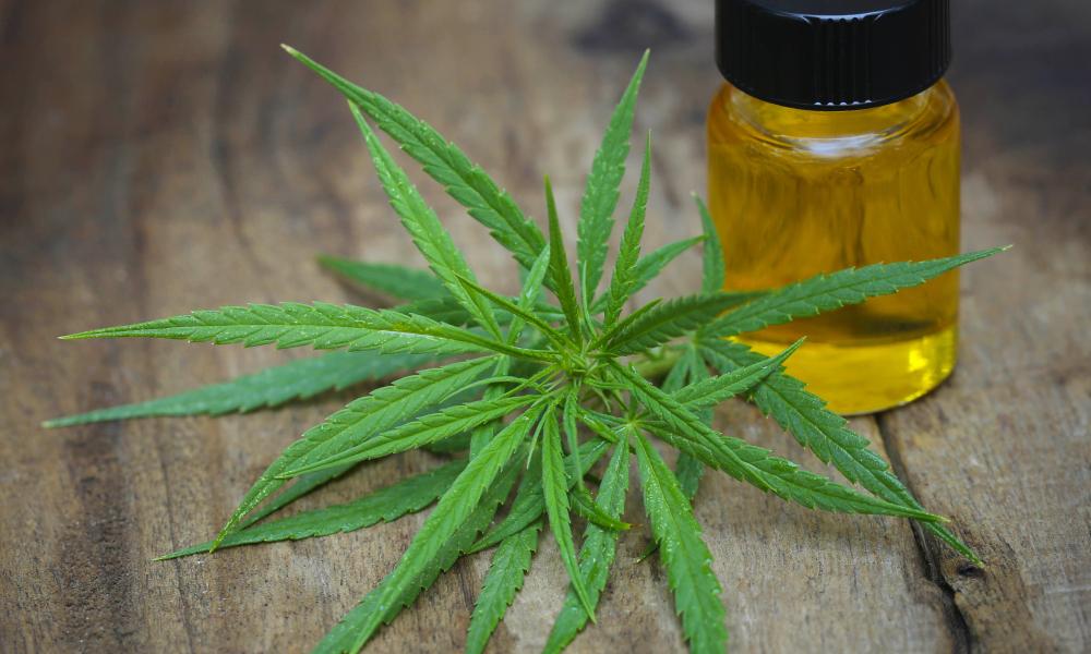 (P) Cauți o dietă ușoară, de vară? Încearcă și tu seminte de cannabis!