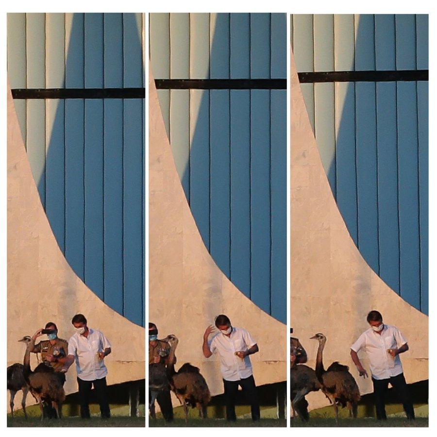 Bolsonaro a fost mușcat de o pasăre în timp ce încerca să o hrănească