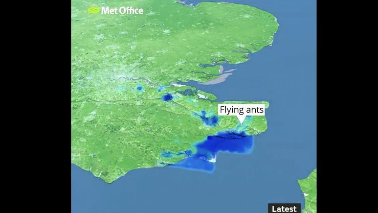 VIDEO. Meteorologii britanici au confundat un roi de furnici zburătoare cu o ploaie torențială