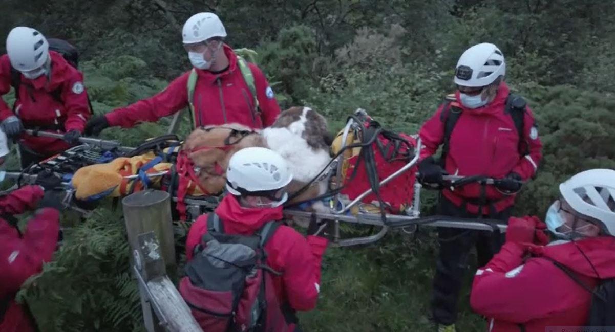 Operațiune dificilă pentru salvarea unui Saint Bernard din munți. Câți oameni au participat