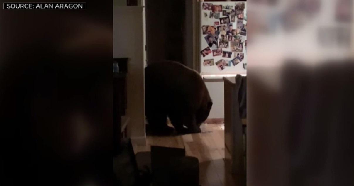 Un urs și-a făcut de cap în bucătăria unei familii: A mancat cereale și a băut lapte cu cacao
