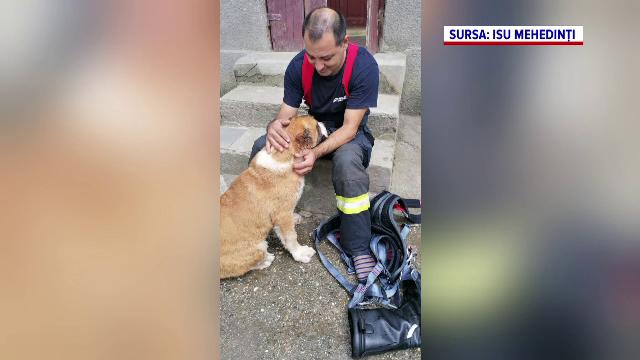 Misiune neobișnuită pentru pompierii militari din Mehedinți. Un câine a fost salvat dintr-o fântănă de 15 m adâncime