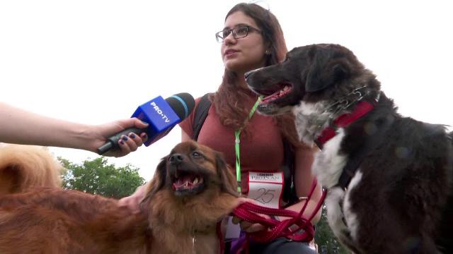 Concursul de frumusețe canină Animal Fest s-a desfășurat la Iași, timp de două zile