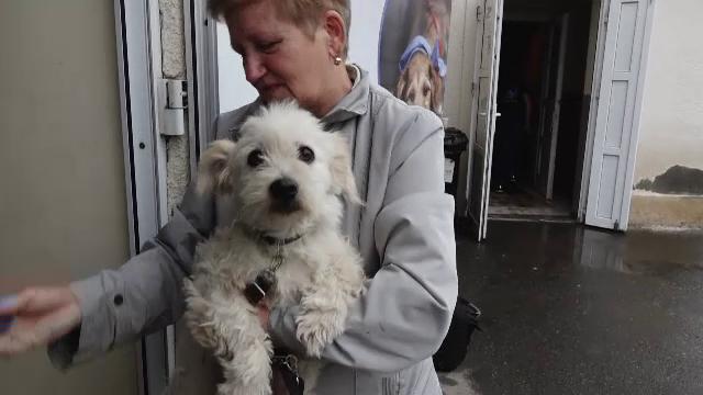 Peste 150 de câini şi pisici, sterilizate gratuit, într-un sat din Mureș, de voluntarii unei asociații