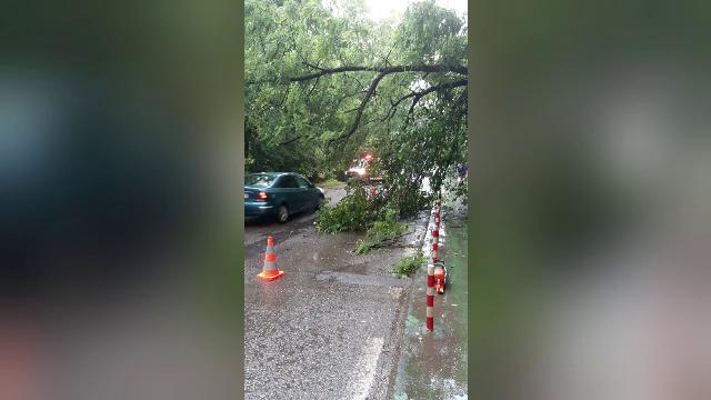 Un arbore s-a prăbușit pe o stradă în Iași. Circulația a fost blocată timp de aproape o oră
