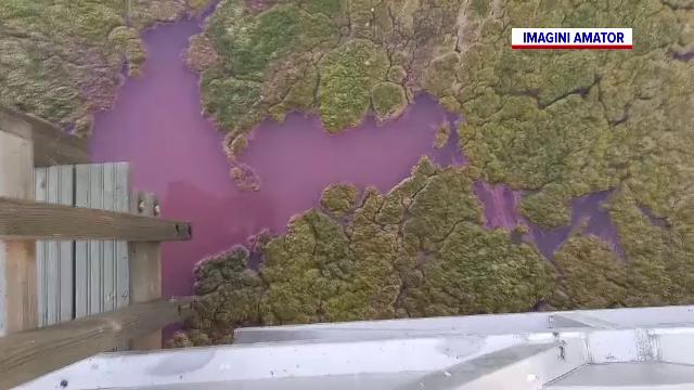 Lacul Techirghiol, în pericol. Este acoperit de o pătură vegetală, urât mirositoare. Cum au reacționat turiștii