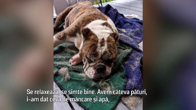 Un gunoier din SUA a salvat de la moarte o cățelușă aruncată într-un tomberon