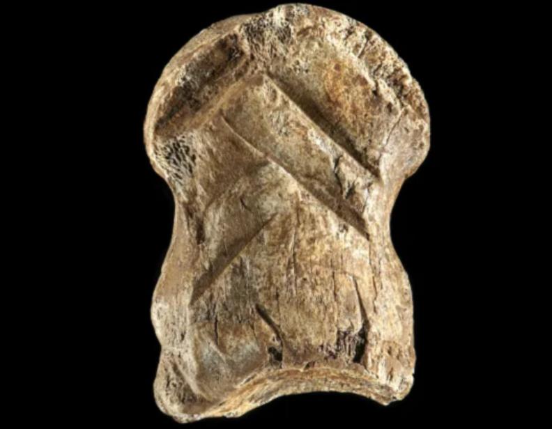 Un os preistoric sculptat, posibil cea mai veche lucrare de artă din lume