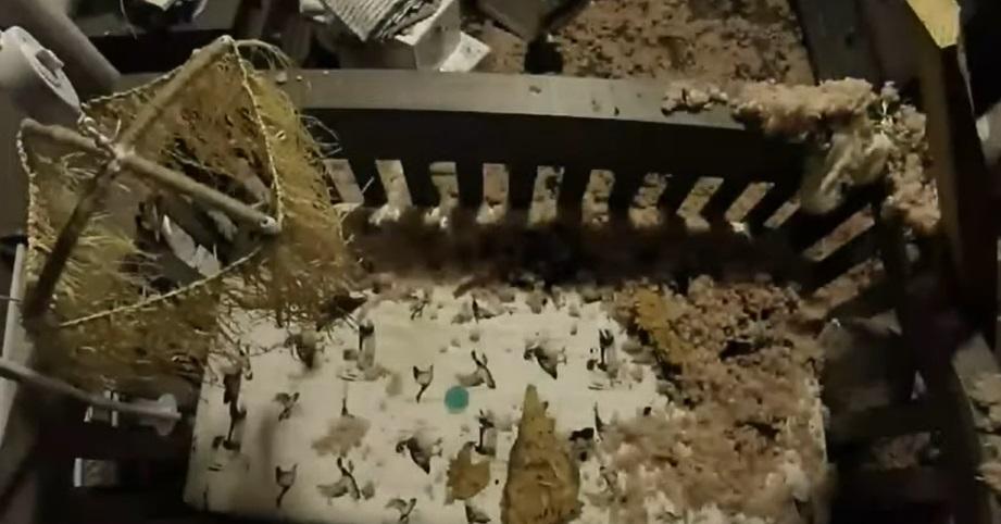 Momentul în care un copac cade pe acoperișul unei case deasupra pătuțului unui bebeluș. VIDEO