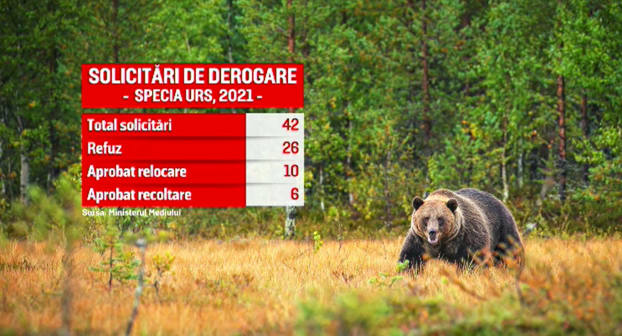 Problema urșilor care intră în localități și atacă oameni, rămasă nerezolvată din cauza birocrației
