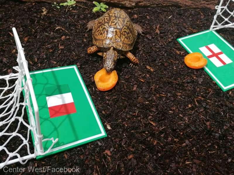 Ţestoasa austriacă Sigmund a pronosticat victoria Italiei asupra Angliei la finala EURO 2020