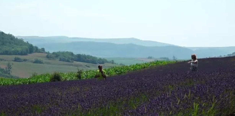 Colțul din România ce seamănă cu Provence. Turiștii au luat cu asalt un deal plin cu lavandă