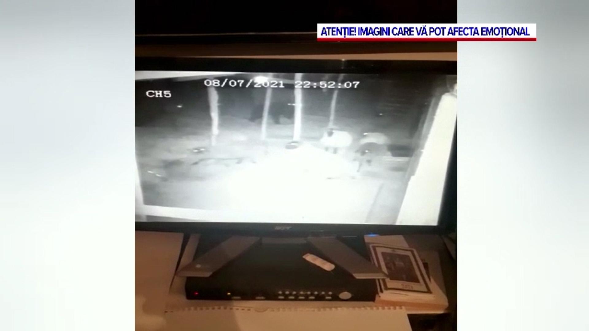 Video. Un urs a fost filmat în timp ce atacă o stână din Argeș