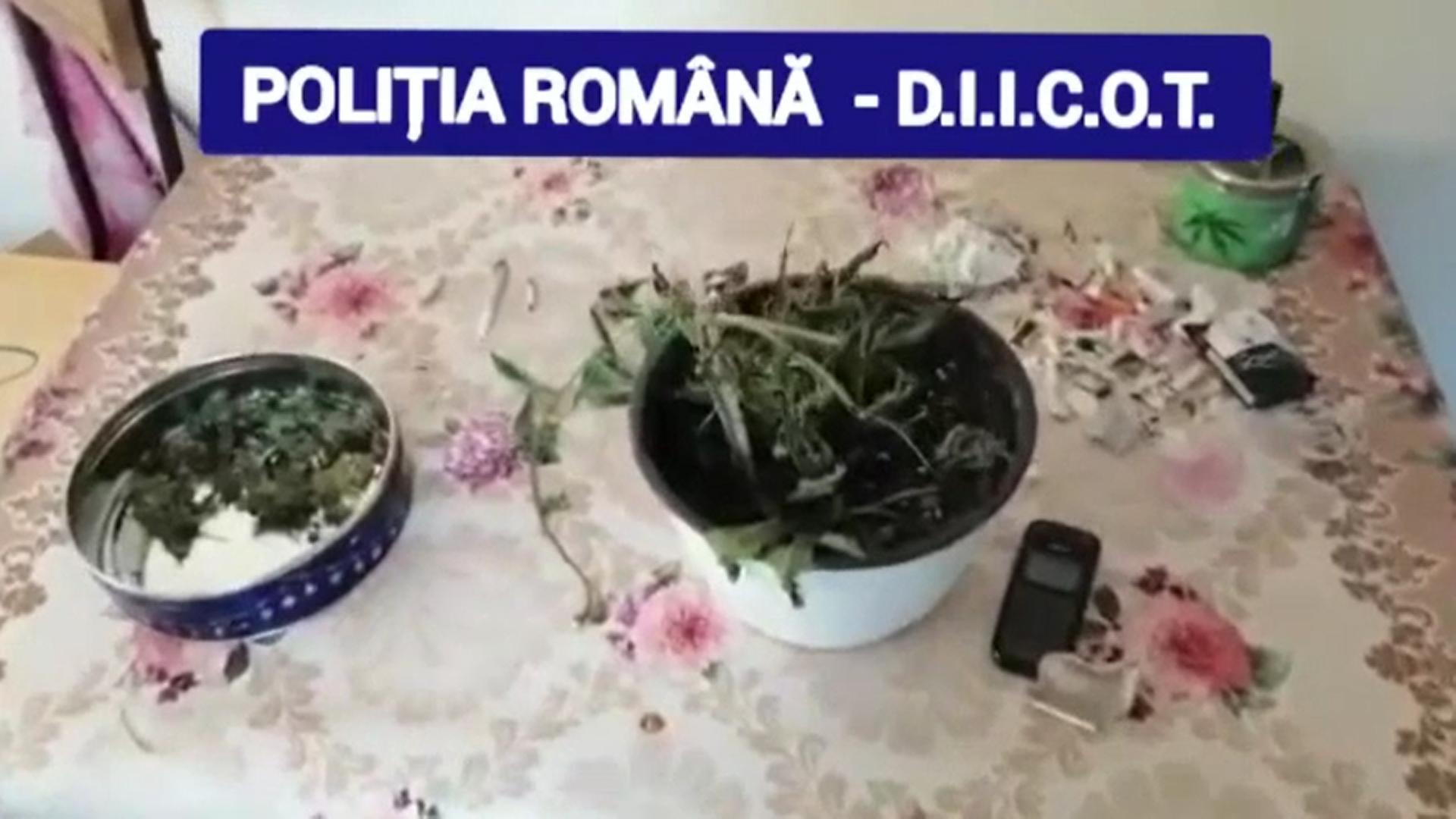 Polițiștii au descoperit o plantație de cannabis în bazinul legumicol Băleni din Dâmbovița