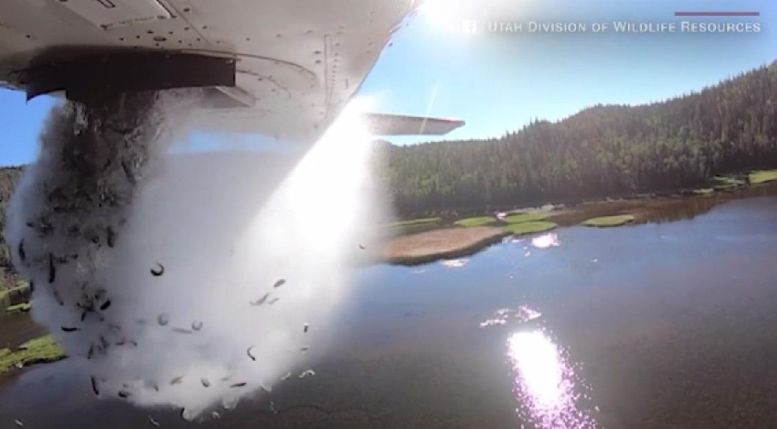 Pești aruncați din avioane, în America. Care este motivul