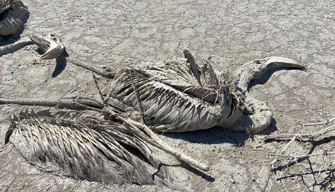 Mii de pui de flamingo găsiţi morţi într-un lac din Turcia ale cărui ape au fost exploatate