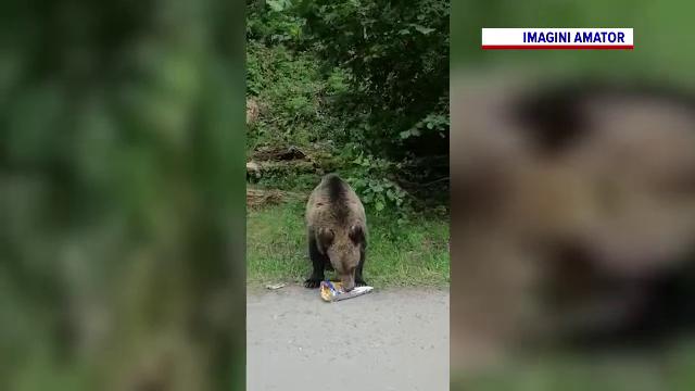 """Turiștii care hrănesc urși au început să fie amendați: """"Un urs hrănit este un urs mort"""