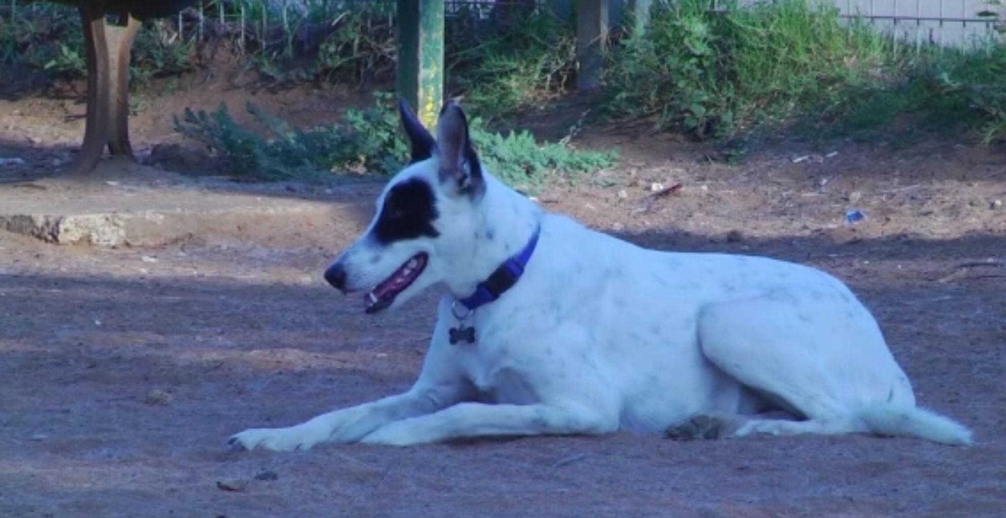 Metoda folosită de Primăria din Tel Aviv pentru a-i prinde pe proprietarii de câini care nu strâng excrementele animalelor
