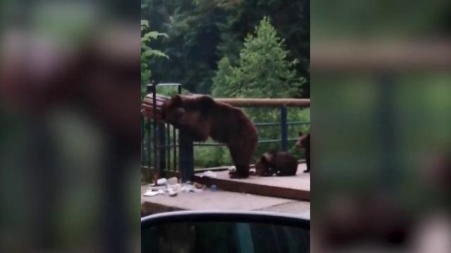 """Localitatea în care ursul apare pe străzi zilnic. În apropiere e și un """"observator de urși"""""""