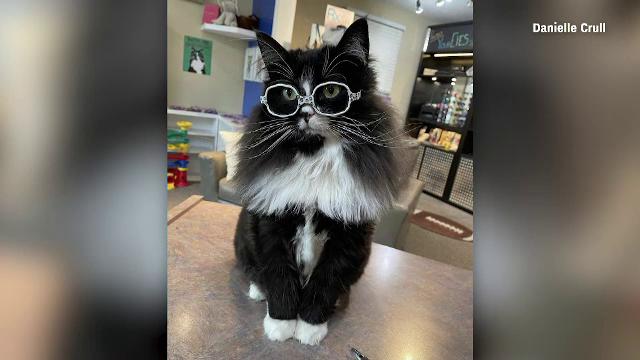 O pisică cu ochelari din SUA ajută copiii să nu se simtă complexați de problemele de vedere